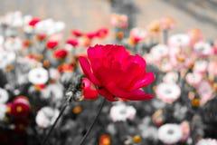 Mooie Roze bloem Stock Afbeelding