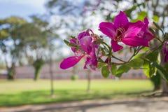Mooie roze bloem op nadruk Stock Foto's