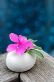 Mooie roze bloem op steen Stock Afbeelding