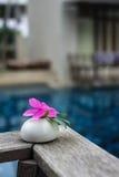 Mooie roze bloem op steen Stock Fotografie