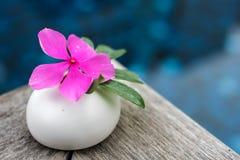 Mooie roze bloem op steen Royalty-vrije Stock Afbeelding