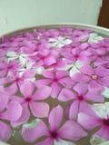 Mooie roze bloem in tuin Royalty-vrije Stock Afbeeldingen