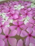 Mooie roze bloem in tuin Stock Foto's