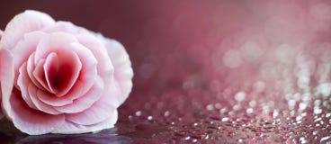 Mooie roze bloembanner Stock Fotografie