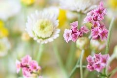 Mooie roze bloemen Royalty-vrije Stock Foto