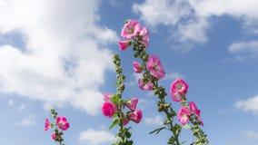 Mooie roze bloemen Stock Afbeelding
