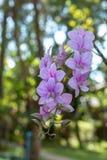 Mooie roze bloemen in de tuin royalty-vrije stock afbeeldingen