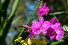 Mooie roze bloemen in de tuin royalty-vrije stock fotografie
