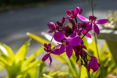 Mooie roze bloemen in de tuin royalty-vrije stock foto's