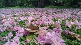 Mooie roze bloemen op het ingediende gras in park Stock Fotografie
