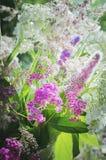 Mooie roze bloemen in zonlicht close-up, selectieve nadruk Mooie achtergrond Verticale Fotografie royalty-vrije stock afbeelding