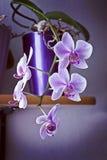 Mooie roze bloesems van orchidee hangend van een vaas Royalty-vrije Stock Afbeelding