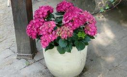 Mooie roze de zomerbloem in decoratieve pot royalty-vrije stock afbeeldingen