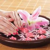 Mooie roze die rozen in vrouwelijke handen worden gehouden Stock Afbeelding