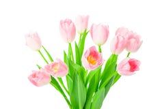 Mooie Roze die tulpenbloemen in vaas op witte backgrou wordt geïsoleerd Royalty-vrije Stock Foto's