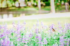 Mooie roze en purpere bloem Royalty-vrije Stock Afbeelding