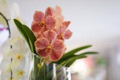 Mooie roze gestippelde orchidee in een vaas royalty-vrije stock foto's