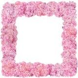 Mooie roze hydrangea hortensia's Stock Foto's
