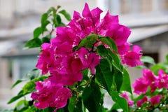 Mooie roze kleine bloemen met waterdalingen na regen stock foto