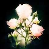 Mooie roze nam achtergrond toe stock fotografie