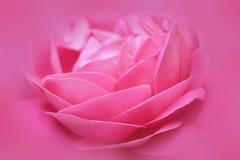 Mooie Roze nam achtergrond van de bloem de abstracte aard toe Royalty-vrije Stock Fotografie