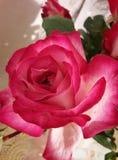 mooie roze nam met een knop in een vaas toe royalty-vrije stock afbeeldingen