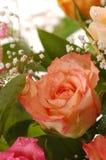 Mooie Roze nam toe Royalty-vrije Stock Foto's
