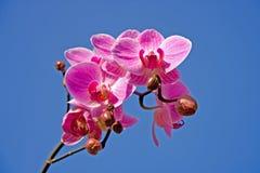 Mooie roze orchidee royalty-vrije stock foto's