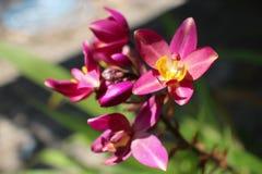 Mooie roze orchidee? achtergrond die in ps wordt gecreërd Stock Foto's