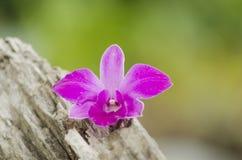 Mooie roze orchidee op een boomstomp Royalty-vrije Stock Foto