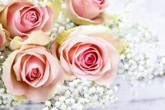 Mooie roze rozen en Gypsophila (baby-Adem bloemen) Royalty-vrije Stock Afbeelding