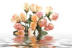 Mooie roze rozen met waterbezinning die op witte achtergrond wordt geïsoleerde Stock Fotografie