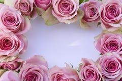 Mooie roze rozen met witte kaart stock foto