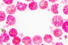 Mooie Roze Rozen op Witte Achtergrond Vlak leg, hoogste mening Bloemenkader van bloemen Royalty-vrije Stock Foto's