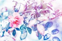 Mooie roze rozen in sneeuw en vorst in een de winterpark Kerstmis artistiek beeld royalty-vrije stock afbeelding