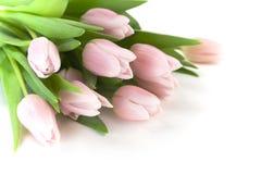 Mooie roze tulpen Royalty-vrije Stock Afbeeldingen