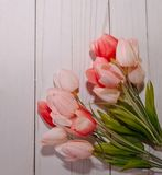 Mooie roze tulpen met een witte achtergrond Royalty-vrije Stock Foto
