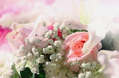 Mooie rozen royalty-vrije stock afbeelding