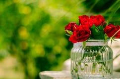 Mooie rozen Stock Afbeelding