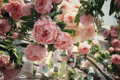 Mooie rozen Royalty-vrije Stock Fotografie