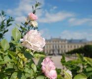 Mooie rozen en mooie Barok en Rococo's Stock Fotografie