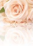 Mooie rozen met bezinning Stock Afbeeldingen