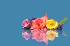Mooie rozen van verschillende kleuren tegen blauw Royalty-vrije Stock Foto's