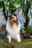 Mooie Ruwe Collie Royalty-vrije Stock Foto