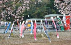 Mooie Sakura-bloesems en kleurrijke Japanse Koinobori-vlaggenvlaggen van vliegende karper Royalty-vrije Stock Foto