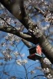 Mooie Sakura in Canada stock fotografie