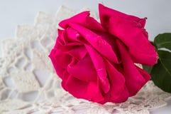 Mooie samenstelling met rode roze bloem groene bladeren stock foto