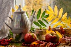 Mooie samenstelling van natte bladeren van Lijsterbes en verse appelen stock fotografie