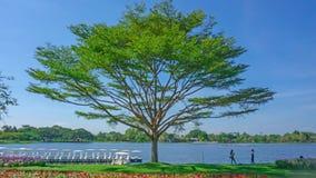 Mooie scène van een grote boom op tuin van groen grasgazon en rode bloeiende installatie, twee mensen die zich in het in de schad stock foto