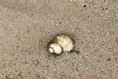 Mooie schoten van de witte stranden op het het paradijseiland van Seychellen met voetafdrukken en watergolven stock foto's